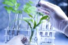 Plant in laboratorium, foto: Thinkstock